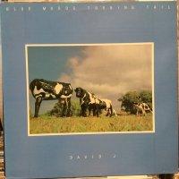 David J / Blue Moods Turning Tail