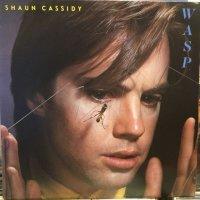 Shaun Cassidy / Wasp